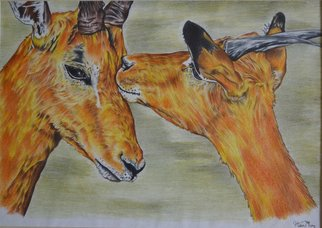Hiten Mistry; Affection, 2013, Original Drawing Other, 30 x 25 cm. Artwork description: 241  art, color pencil, affection, impalas, deer, wildlife, animals, nature, color pencil, deer painting, horns, hiten mistry ...