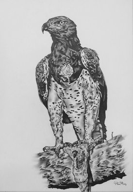 Hiten Mistry; Eagles End, 2015, Original Drawing Other, 30 x 25 cm. Artwork description: 241     art, eagles end, eagle, eagles, animals, wildlife, eagle drawings, birds, eagle paintings, feathers, lizard, black and white eagle drawing, black and white drawing, claws, hiten mistry    ...