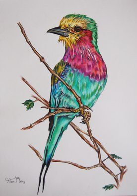 Hiten Mistry; Lilac Breasted Roller, 2014, Original Drawing Other, 25 x 30 cm. Artwork description: 241  art, lilac breasted roller, birds, green, pink, feathers, lilac, branch, twigs, animals, wildlife, bird paintings, lilac breasted roller paintings  hiten mistry     ...