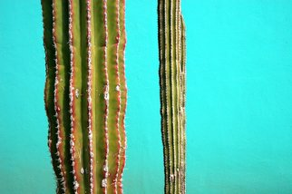 Harvey Horowitz; Cabo Cactus Duo, 2006, Original Photography Color, 24 x 36 inches. Artwork description: 241  Cabo Cactus Duo 36