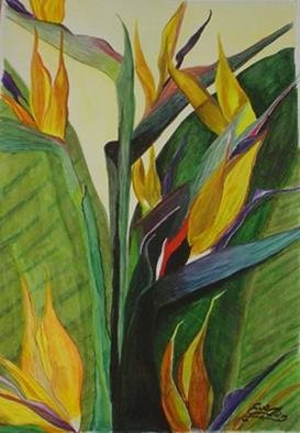 Eve Co, Birds of Paradise, 1998, Original Watercolor, size_width{Birds_of_Paradise-1138545115.jpg} X 22 x  inches