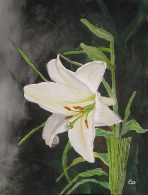 Eve Co; Easter Lily, 2010, Original Watercolor, 9 x 12 inches. Artwork description: 241  Easter Lily - This painting depicts the Easter Lily which is the symbol of the Easter Seals Society and one of my favorite Lily's as well.  The background is very dark to highlight the simple beauty of this particularly exquisite flower.  This painting is NOW for sale, ...