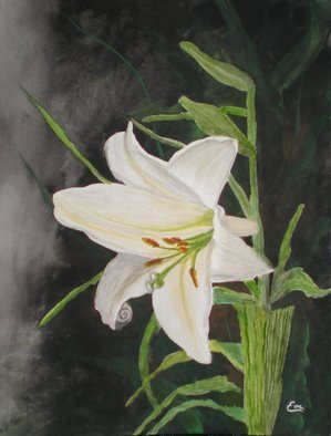 Eve Co; Easter Lily, 2010, Original Watercolor, 9 x 12 inches. Artwork description: 241  Easter Lily i? 1/2 This painting depicts the Easter Lily which is the symbol of the Easter Seals Society and one of my favorite Lilyi? 1/2s as well.  The background is very dark to highlight the simple beauty of this particularly exquisite flower.  This painting is NOW for sale, ...