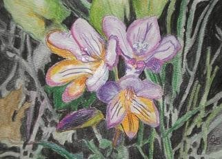 Eve Co, 'Freesia', 2009, original Watercolor, 5 x 7  inches. Artwork description: 1911  Freesia - Rough watercolor sketch of Freesia bunch, small painting with watercolors and watercolor pencils.Shipping charges are not accurate, but will not charge over that amount.  Shipping charges will be kept to a fair amount. ...