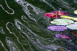 James Parker; Lake Lillies And Ripples, 2003, Original Photography Color, 9 x 7 inches. Artwork description: 241 A very pleasing photograph of sunlight ripple reflections and some brightly colored lake lillies. Taken recently at Lake Hope in southeastern Ohio. ...