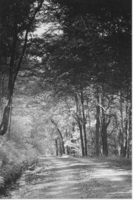 James Peer; Forest Road, 2003, Original Photography Black and White, 5 x 8 inches.