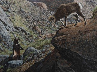Jeff Cain; Among The Stones Above Gl..., 2016, Original Painting Other, 46 x 60 cm. Artwork description: 241        Adult female wolverine with Stone sheep ram in in mountain slopes above Gladys Lake, NW British Columbia, Canada.             Adult female wolverine feeding on a frozen reindeer carcass in NE Russia.     ...