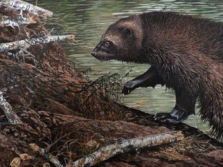 Jeff Cain; Beaver Hunt, 2016, Original Painting Other, 46 x 60 cm. Artwork description: 241         Adult female wolverine on beaver lodge in SW Yukon, Canada            ...