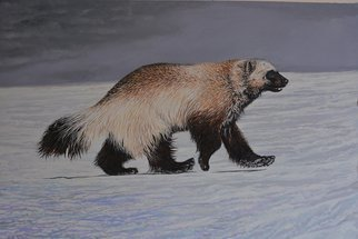 Jeff Cain; Kamchatka Winter Wolverine, 2015, Original Painting Other, 76 x 56 cm. Artwork description: 241   Adult male wolverine ( Gulo g gulo) on tundra ice on Kronotsky Reserve, Kamchatka  ...