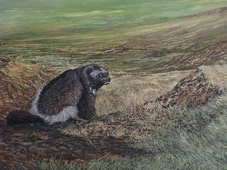 Jeff Cain; North Of The Utukok River, 2015, Original Painting Other, 90 x 60 cm. Artwork description: 241      Adult male wolverine ( Gulo g  luscus) on summer tundra of NW Alaska.         ...