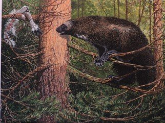 Jeff Cain; Reindeer Cache, 2015, Original Painting Other, 60 x 46 cm. Artwork description: 241  Adult female wolverine ( Gulo g gulo) in boreal forest of NE Finland           ...