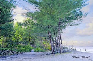 Thomas Jewusiak; Beach Woods, 2007, Original Painting Oil, 26 x 20 inches.