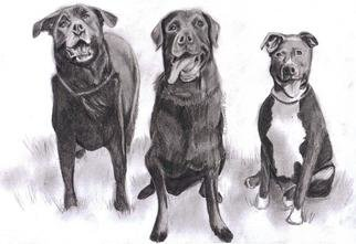 Jodie Hammonds; 3 Doggies, 2012, Original Drawing Pencil, 8 x 10 inches. Artwork description: 241  3 doggies             ...