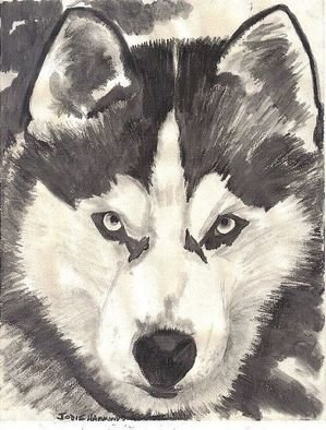 Jodie Hammonds; Husky, 2011, Original Drawing Charcoal, 8 x 10 inches. Artwork description: 241  Graphite of Husky  ...