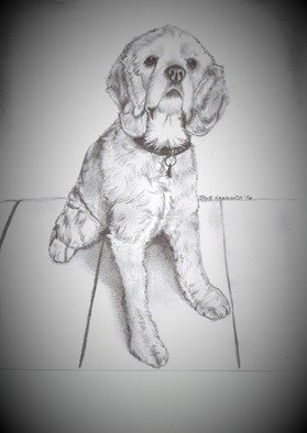 Jodie Hammonds; Beloved Rescue, 2016, Original Drawing Graphite, 8 x 10 inches. Artwork description: 241 Cocker Spaniel, rescue dog...