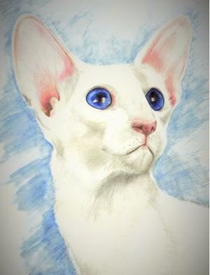 Jodie Hammonds; Grand Champion Blanca, 2016, Original Drawing Pencil, 8 x 10 inches. Artwork description: 241 Cat, Blue eyes...