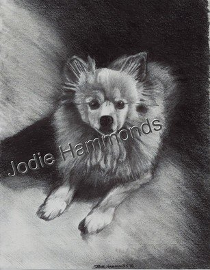 Jodie Hammonds; Memorial Pomeranian, 2016, Original Drawing Charcoal, 8 x 10 inches. Artwork description: 241 Pomeranian, dog...