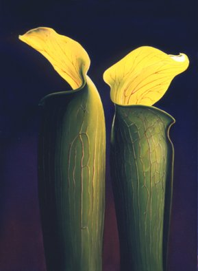 Anni Adkins; Two Jacks, 2006, Original Painting Oil, 18 x 24 inches. Artwork description: 241  jack in the pulpet, oil painting, flower painting, floral paintings, paintings of jack in the pulpets, Anni Adkins ...