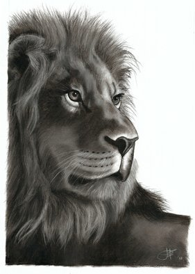 Jessica Fowlds; King Of The Jungle, 2018, Original Drawing Charcoal, 11.7 x 16.5 inches. Artwork description: 241 The Lion - King of the Jungle on the African continent. A symbol of strength and pride.  I was inspired to draw this piece by my love for these animals, which I have grown up alongside in South Africa. I trust this print will inspire you to have ...