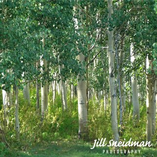 Jill Sneidman; into the woods, 2015, Original Photography Color, 30 x 30 inches. Artwork description: 241 Crested Butte, Colorado...