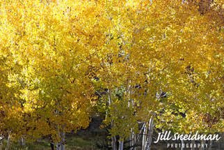 Jill Sneidman; leaves of gold, 2017, Original Photography Color, 30 x 24 inches. Artwork description: 241 Grand Staircase Escalante Utah...