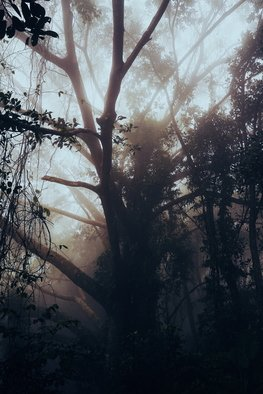 Anastasia Kaminskaya; Magic Forest, 2020, Original Photography Color, 30 x 40 inches. Artwork description: 241 Fog in magic forest.  Printed on watercolor paper...