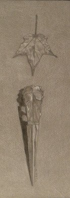 Kelly Parker, Crane Skull with leaf, 2010, Original Drawing Pencil, size_width{Crane_Skull_with_leaf-1310996504.jpg} X 12 x  inches