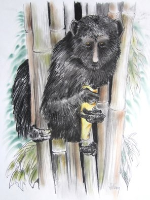 Ken Hillberry; Aye Aye, 2014, Original Drawing Other, 18 x 24 inches. Artwork description: 241  The Aye Aye is a mammal, unusual primate. . . large eyes, big bat- like ears, long thin fingers and it's face is much lighter flesh tone. Their eyes are distinguishable being yellowish- orange in color. The 4 lb. adult prefers a habitat with forest mangroves and bamboo ...