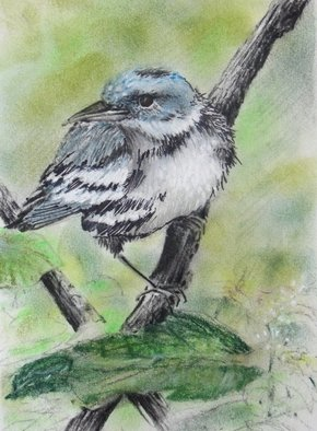 Ken Hillberry; Cerulean Warbler, 2013, Original Drawing Pencil, 5 x 8 inches. Artwork description: 241    native birds                            ...