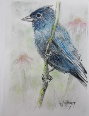 Ken Hillberry; Indigo Bunting, 2013, Original Drawing Pencil, 5 x 7 inches. Artwork description: 241   native birds                           ...