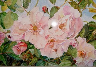 Kristin Morrill; Bee On Pink Roses, 2008, Original Watercolor, 20 x 24 inches. Artwork description: 241  A bee, a ladybug, on pink roses. ...