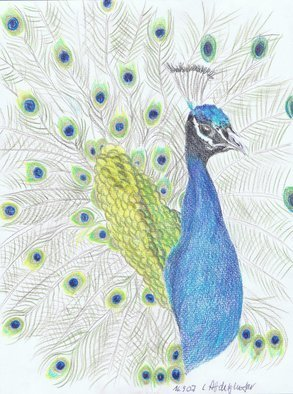 Claudia Luethi Alias Abdelghafar; A Wonderful Proud Peacock, 2007, Original Drawing Other, 210 x 297 mm. Artwork description: 241 A wonderful proud peacock Drawing with colored pencil on paper DIN A4...