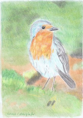 Claudia Luethi Alias Abdelghafar; Red Breast, 2010, Original Drawing Other, 210 x 297 mm. Artwork description: 241 Little nice red breastColored pencil on DIN A4 paper...