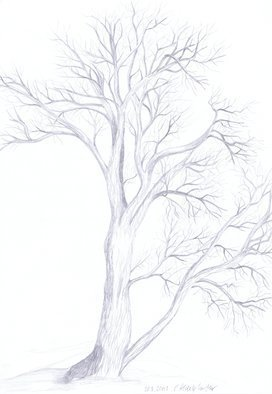 Claudia Luethi Alias Abdelghafar; Willow Tree, 2003, Original Drawing Other, 297 x 420 mm. Artwork description: 241 Willow tree studyDrawing with pencil on DIN A3 paper...