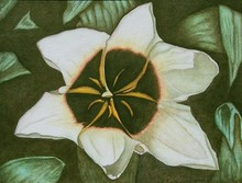 Artist: Peggy Thomas Cacalano's, title: Star Magnolia, 2010, Reproduction