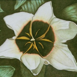 Peggy Thomas Cacalano, Star Magnolia, 2010, Original Printmaking Giclee, size_width{Star_Magnolia-1410868330.jpg} X 11 x  inches