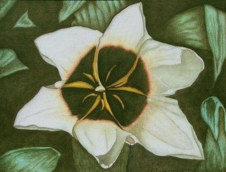 Peggy Thomas Cacalano, Star Magnolia, 2010, Original Giclee Reproduction, size_width{Star_Magnolia-1457947305.jpg} X 11 x  inches