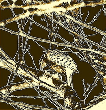 Luise Andersen WOODPECKER  In My Apricot Tree  Digital Art Three, 2007