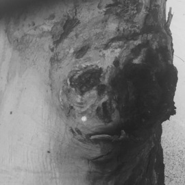 Luise Andersen, , , Original Photography Other, size_width{portraits_of_a_tree_series_1-1543950998.jpg} X 24 inches