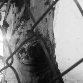 Luise Andersen, , , Original Photography Other, size_width{portraits_of_a_tree_series_2-1543951650.jpg} X 24 inches