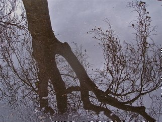 Luise Andersen, 'Reflection PKGLT II', 2011, original Photography Color, 21 x 23  x 1 inches. Artwork description: 49827   . . giant tall trees. . reflections so clear. . in the rain puddle on parking lot in the park we walk in. . Fontana, Calif.took soo many photographs. . from all kind of distances and sides. . to capture trees the way I 'see' them mirrored in the rain water. . their' abstractness' . . ...