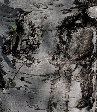 Luise Andersen, 'With The Eyes Of Mignon MIG I', 2012, original Photography Other, 19 x 25  x 1 inches. Artwork description: 51411   . . tree bark. . . ...