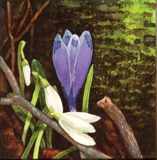 Lisa Pagnutti; Crocus, 2015, Original Watercolor, 12 x 12 cm. Artwork description: 241  look at the beauty inside little things ...