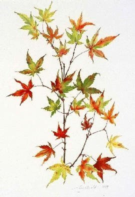 Lucy Arnold; Japanese Maple, 1997, Original Giclee Reproduction, 18 x 24 inches. Artwork description: 241 Signed, limited edition giclee print of original watercolor.  This peaceful, delicate image captures the many colors and nuances of japanese maple leaves in autumn....