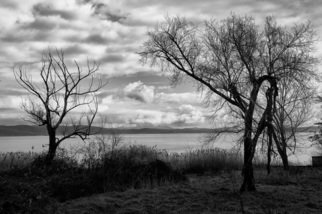 Bernhard Luettmer; Lago IV, 2009, Original Photography Black and White, 70 x 100 cm. Artwork description: 241                 Landscape in Tuscany/ Landscape, italy, tuscany, morning, totady, tree,                ...