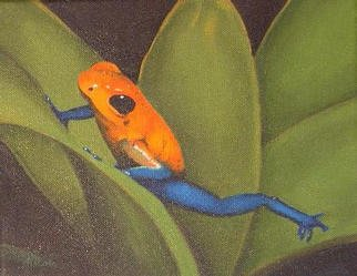 Nicola Lupoli; Tree Frog, 2003, Original Painting Oil, 10 x 8 inches.