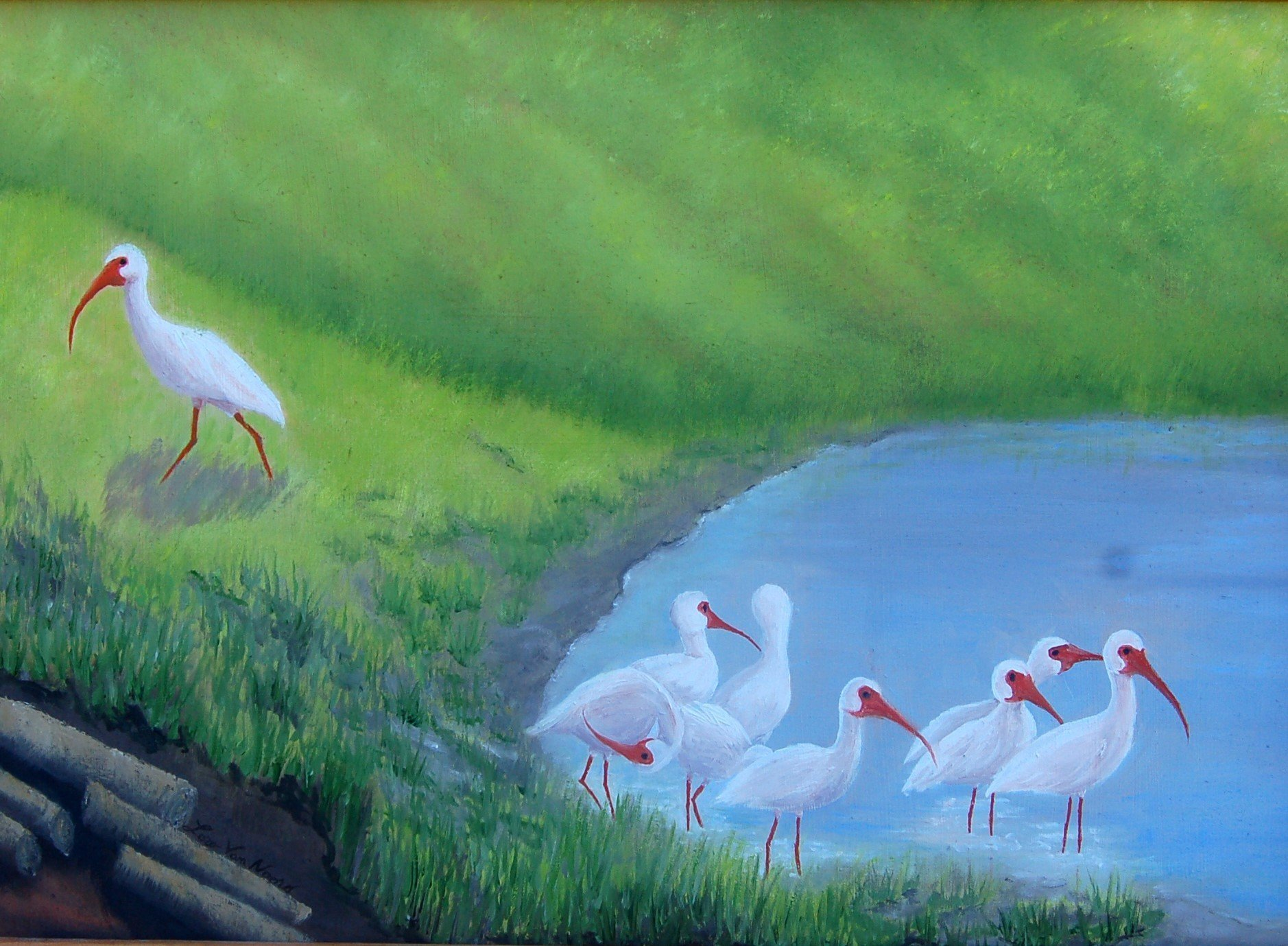 Lora Vannoord; Ibis Birds, 2016, Original Painting Oil, 20 x 14 inches. Artwork description: 241 Original oil painting of Ibis birds at a pond in Florida. I love to watch them run around in a group looking for food. Includes custom wooden frame ...