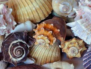 Lynda Lehmann; Elegant Companions, 2015, Original Photography Digital, 24 x 18 inches. Artwork description: 241  These seashells offers a colorful variety of forms and gestures, and only begin to hint at the richness and mysteries of nature.  Keywords:  shells, seashells, marine life, creatures, denizens, ocean dwellers, nature, beauty, patterns, gesture, color, ridges, conch, circular, beautiful, collection, graceful, elegant, mysterious, rich, furrows, lines, ...
