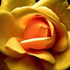 Lynda Lehmann, , , Original Photography Other, size_width{Sundrenched-1182033902.jpg} X 12 inches