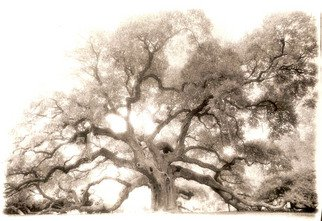 Mary Anne Mitchell; Angel Oak, 2006, Original Photography Silver Gelatin, 20 x 16 inches.